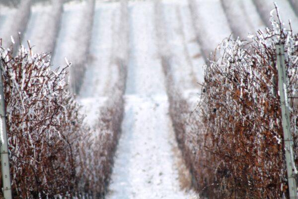 Villány télen