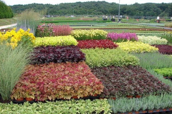 Tradicionális évelő kertészet az Őrségben