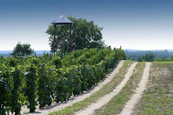 Kis borászati verstan – haladóknak